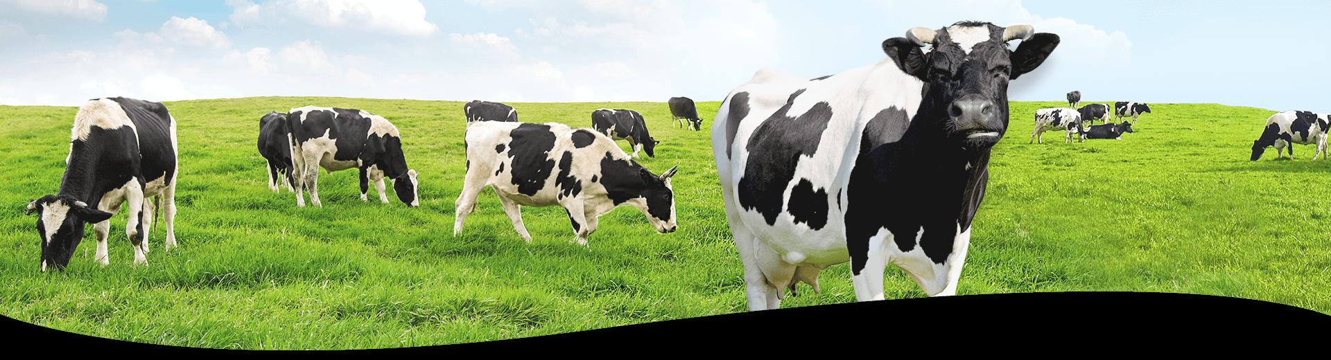 產品資訊-牛奶粉橫幅